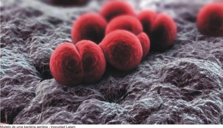 bacteria-aerobia