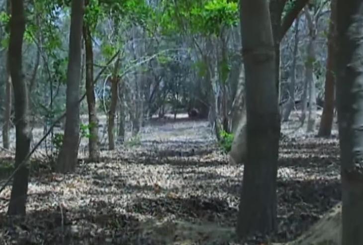 floresta_egito