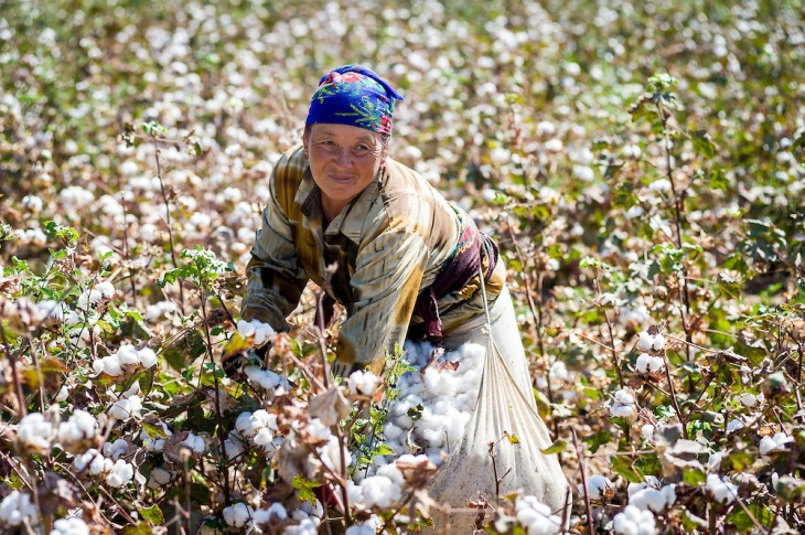 workers on cotton fields