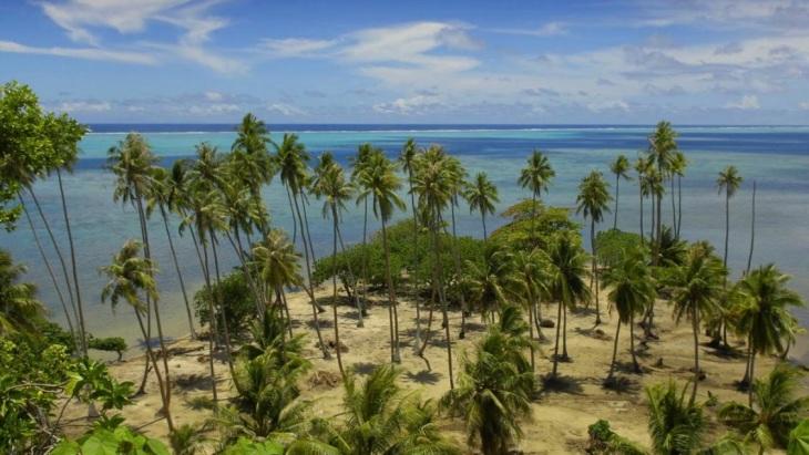 Coqueiros na Polinésia