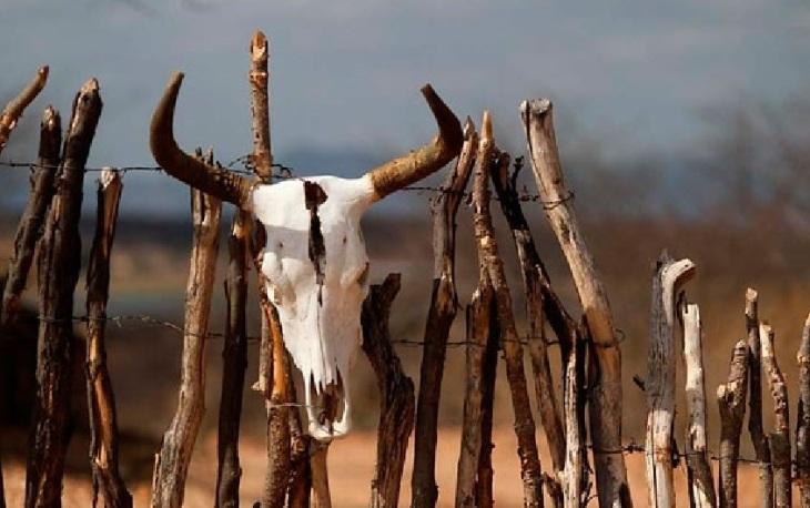 Morte de gabo por causa da seca