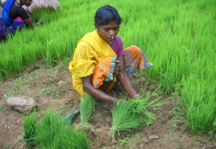 Agricultura na Índia