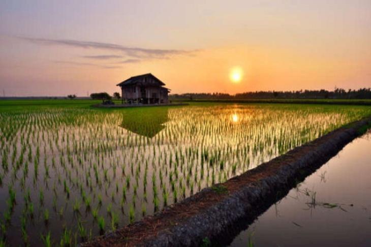 Agricultura na China