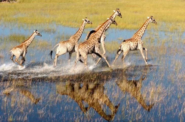 Delta do rio Okavango