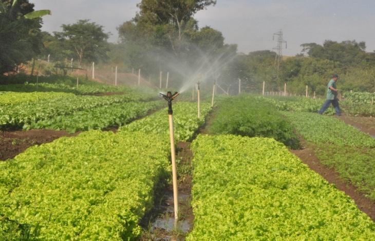 Irrigação de hortas