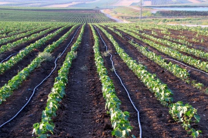 Irrigação por micro gotejamento