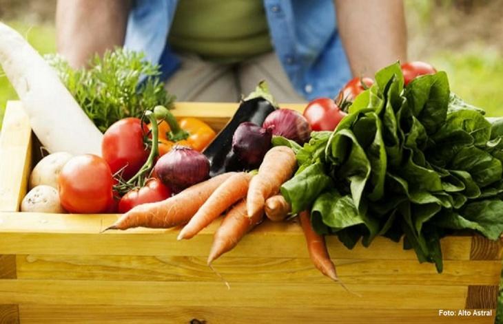 Verduras e vegetais