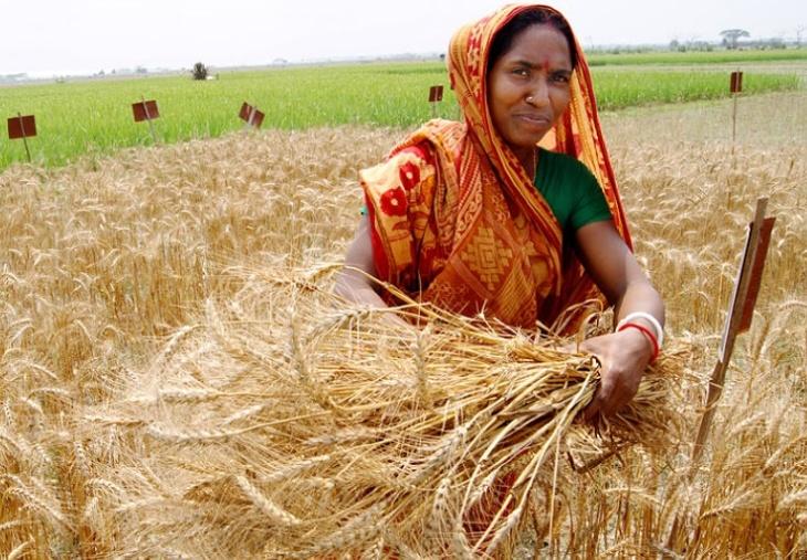 Agricultura em Bangladesh