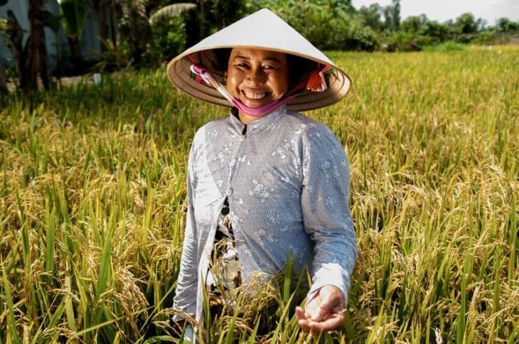 Arrozais no Vietnã