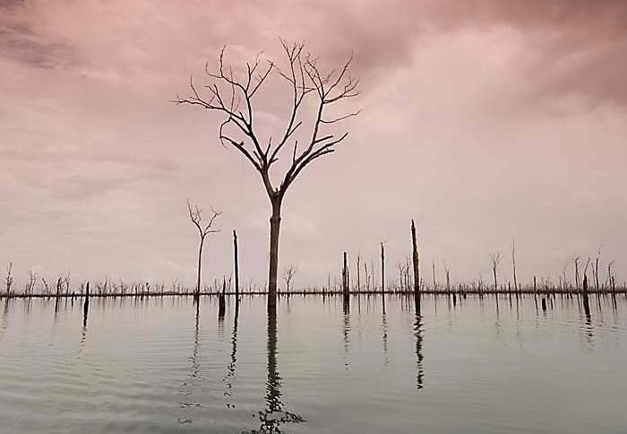 Floresta inundada pela represa da Usina Hidrelétrica de Balbina
