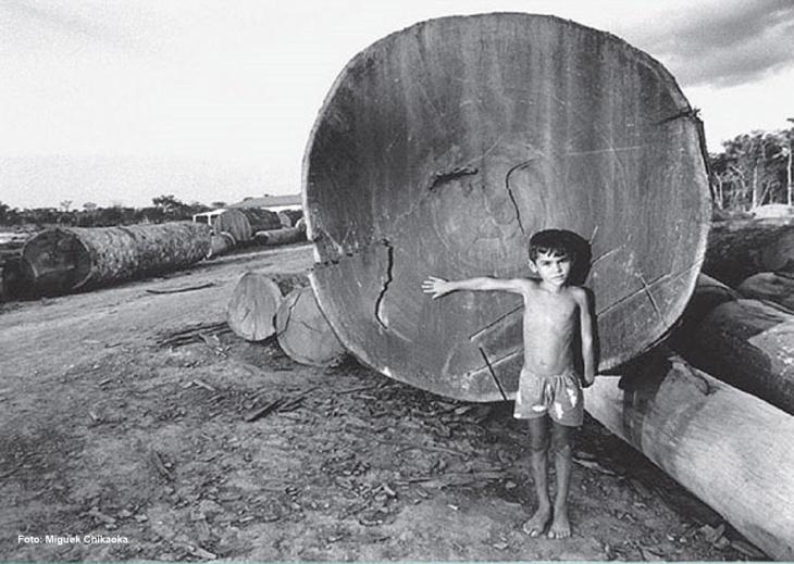 Exploração madeireira na Amazônia
