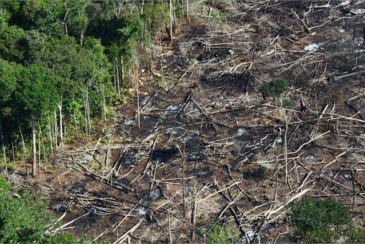 Desmatamentos na Amazônia 2019