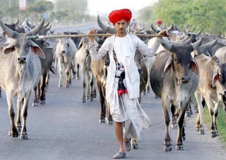 Criação de gado na Índia