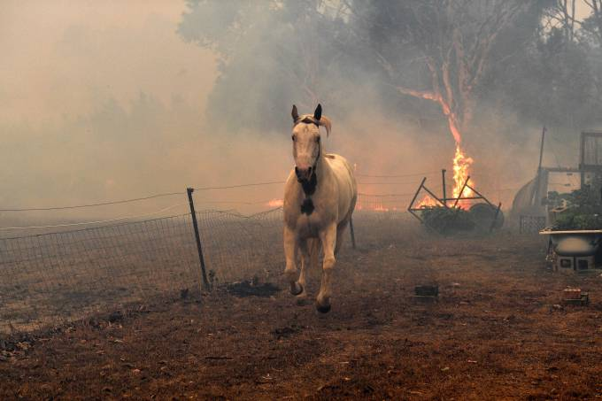 Cavalo fugindo de incêndio na Austrália