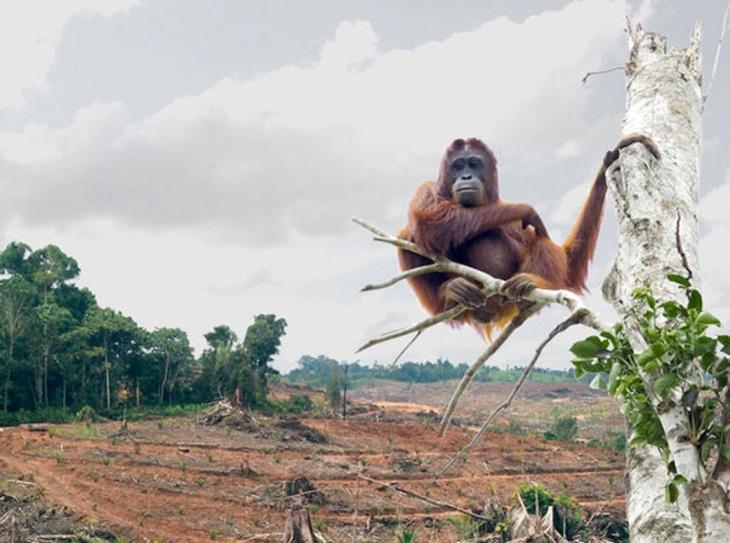 Destruição de florestas na Indonésia
