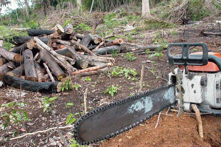 Destruição de florestas no Sudeste Asiático
