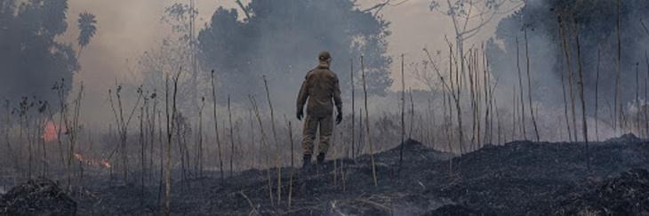 Destruição de florestas