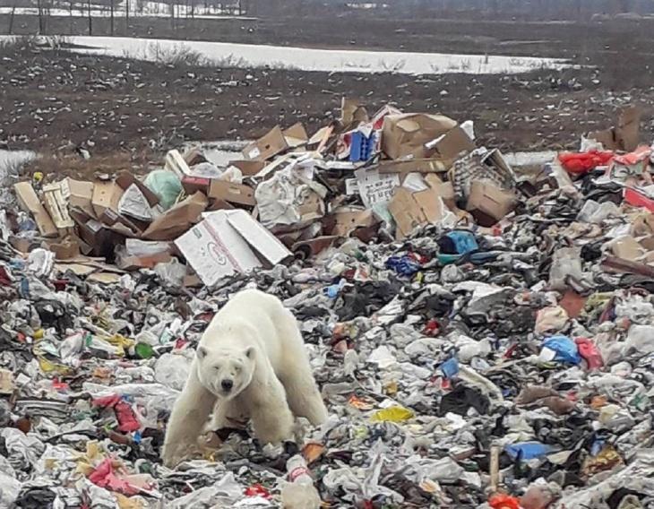Lixões na Rússia