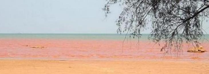 Mar Vermelho na Malásia