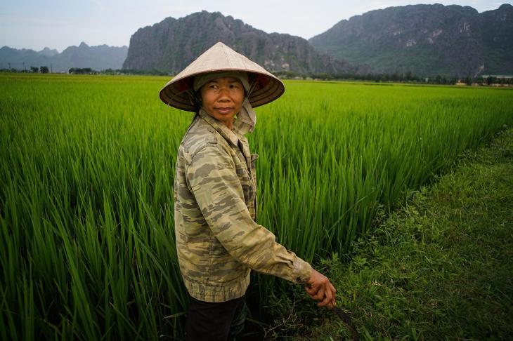 Plantações de arroz no rio Mekong