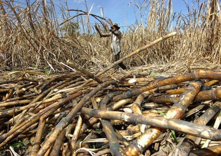Colheita de cana em Cuba